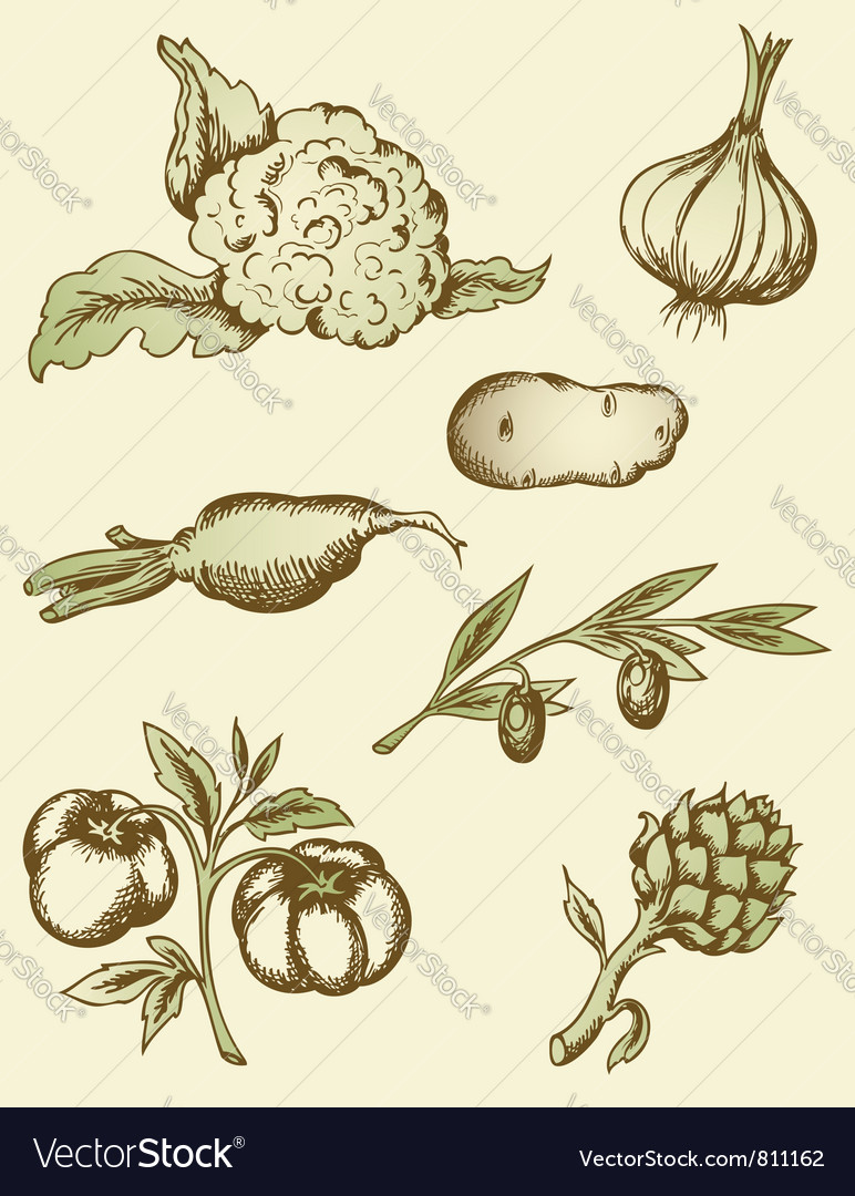 Vegetables vector | Price: 1 Credit (USD $1)
