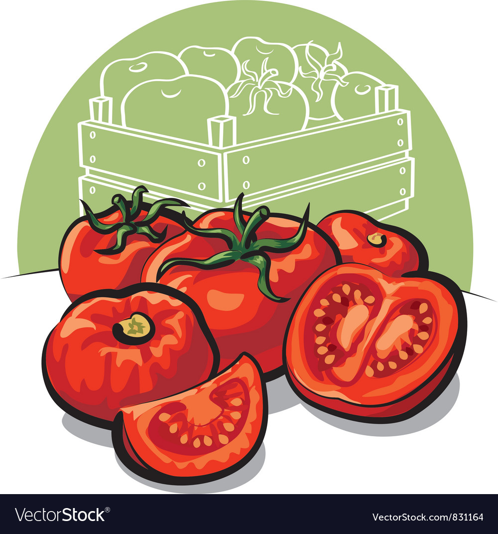 Fresh tomatoes vector | Price: 3 Credit (USD $3)