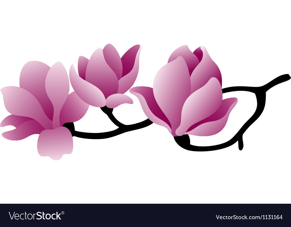 Magnolia vector | Price: 1 Credit (USD $1)