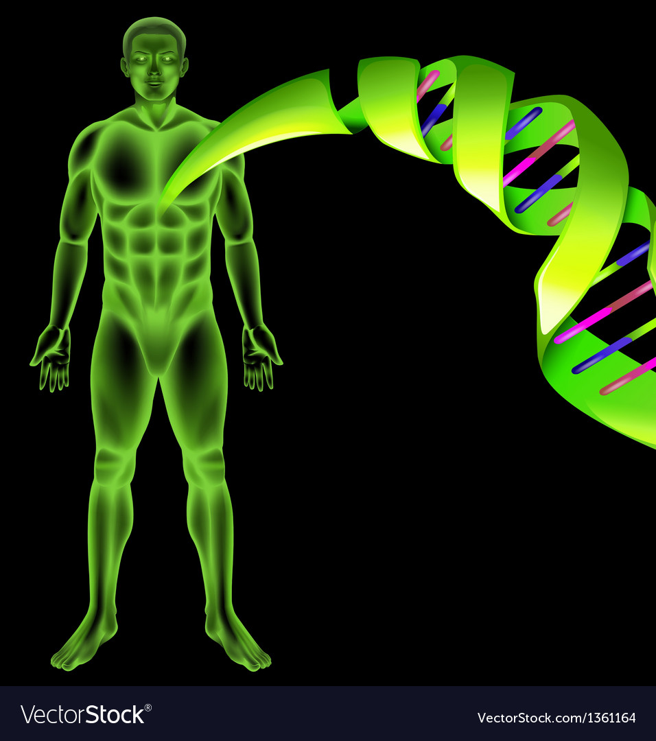 Male human dna vector | Price: 1 Credit (USD $1)