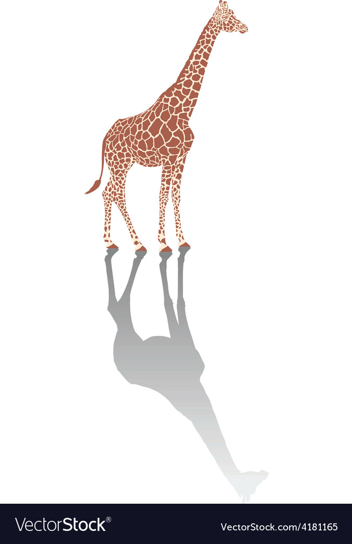 Giraffe with shadow vector | Price: 1 Credit (USD $1)