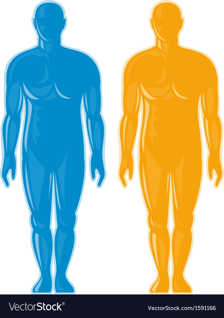 Male human anatomy standing front vector | Price: 1 Credit (USD $1)