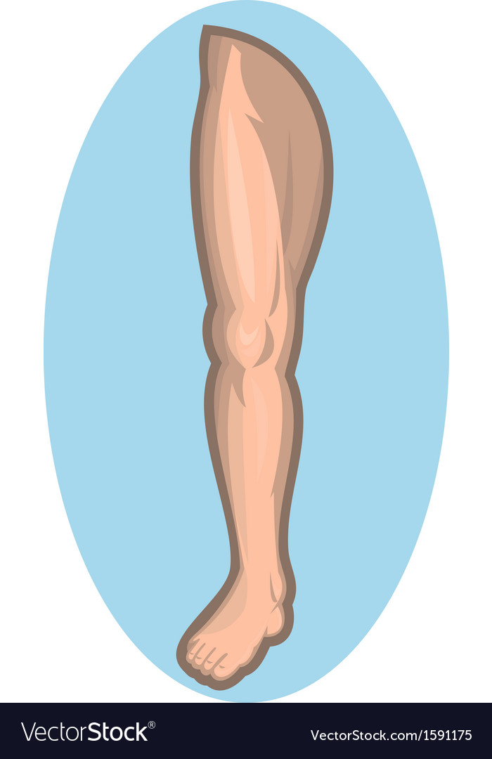 Human leg facing front vector | Price: 1 Credit (USD $1)