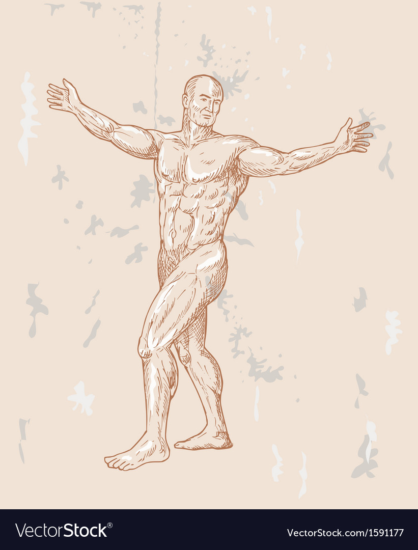Male human anatomy vector | Price: 1 Credit (USD $1)