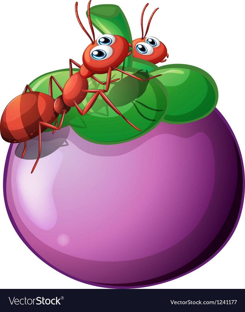 The two ants and the violet fruit vector | Price: 1 Credit (USD $1)