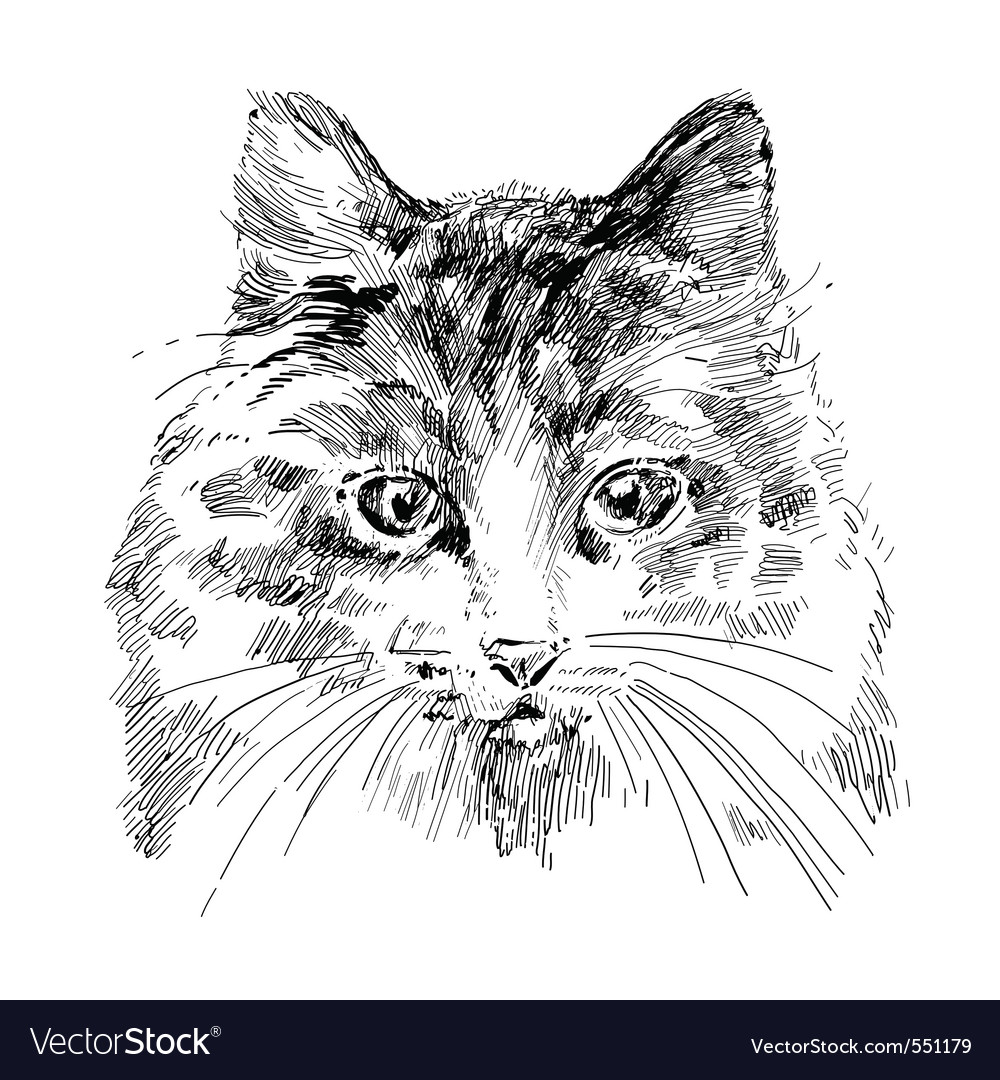 Cat sketch vector | Price: 1 Credit (USD $1)