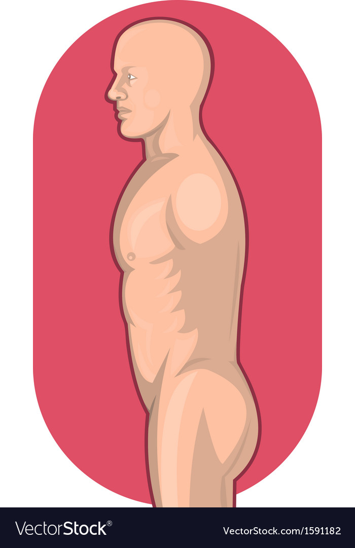 Male human anatomy standing side view vector | Price: 1 Credit (USD $1)