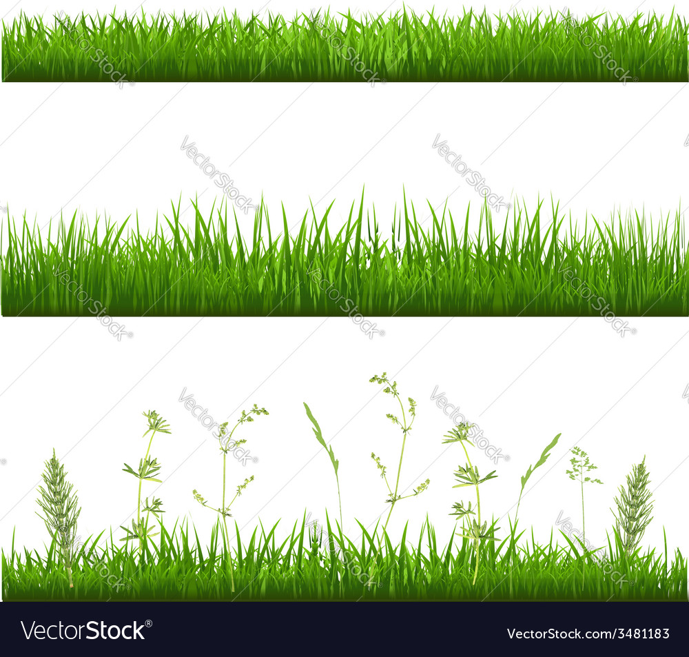 Grass borders vector | Price: 1 Credit (USD $1)
