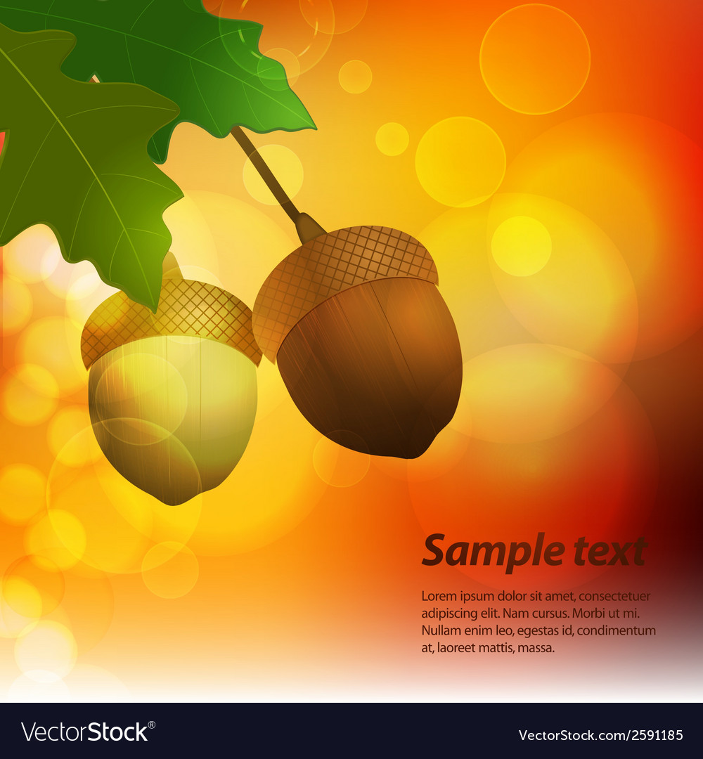 Autumn acorn background with sample text vector | Price: 1 Credit (USD $1)