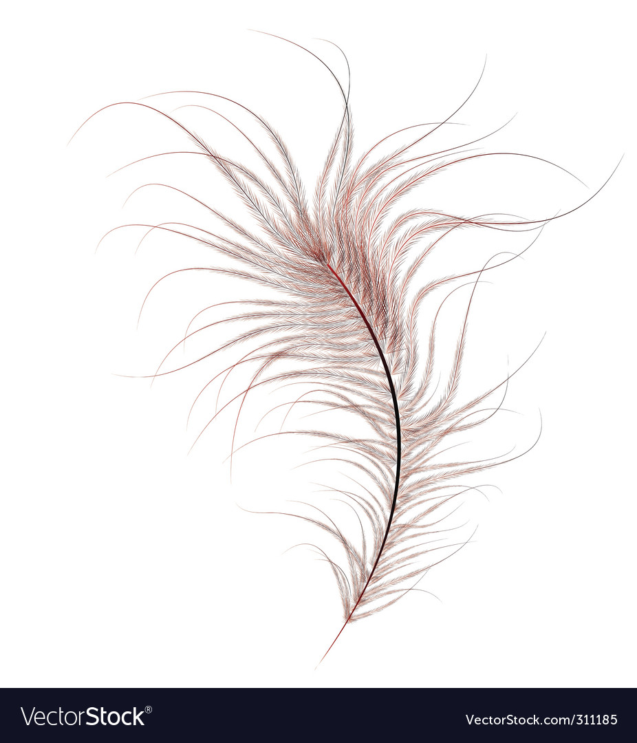 Ostrich feather vector | Price: 1 Credit (USD $1)