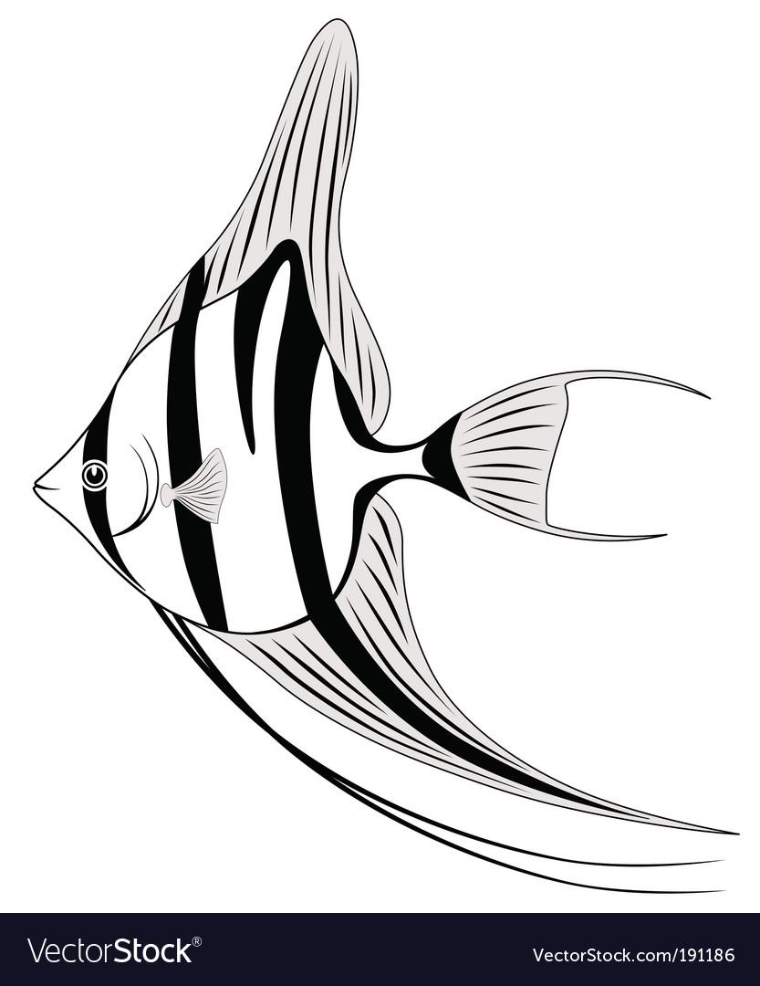 Angel fish vector | Price: 1 Credit (USD $1)