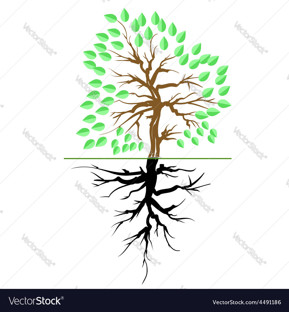 Green tree with root vector | Price: 1 Credit (USD $1)