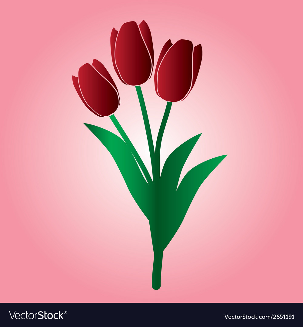 Red tulip flower eps10 vector | Price: 1 Credit (USD $1)