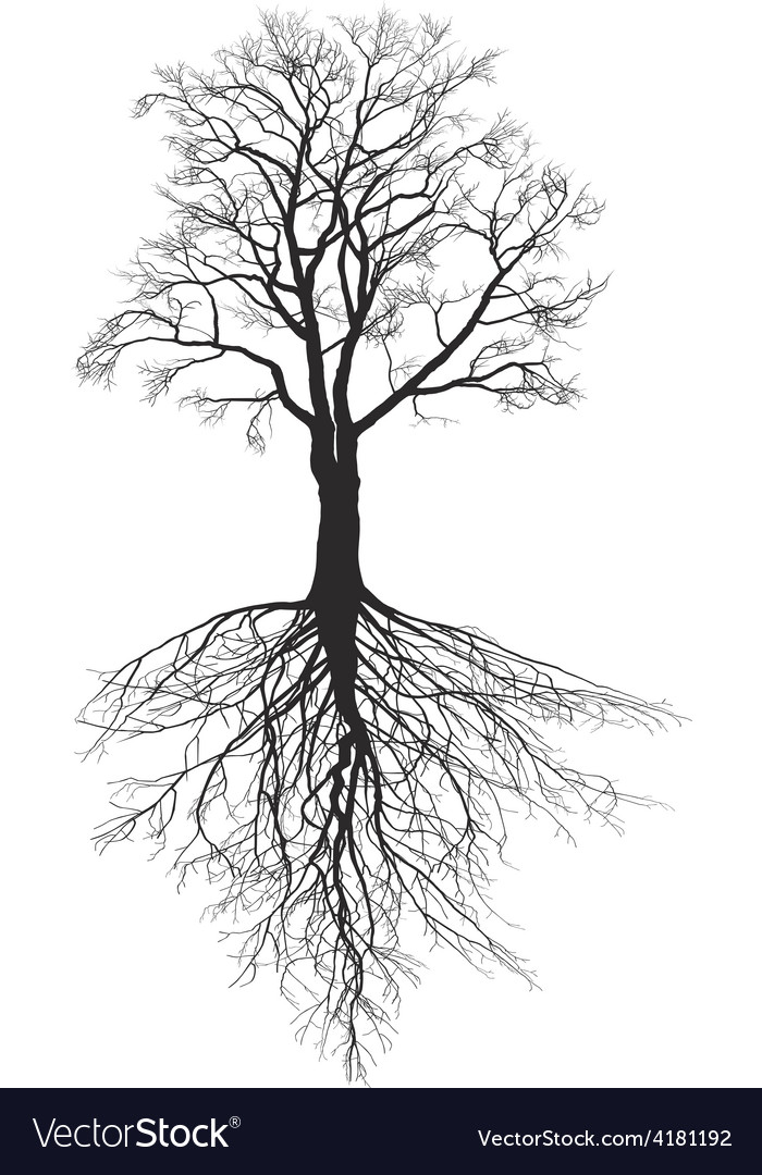 Walnut tree with roots vector