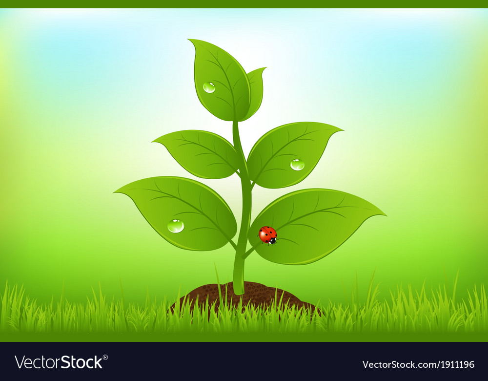 Green sprout vector | Price: 1 Credit (USD $1)