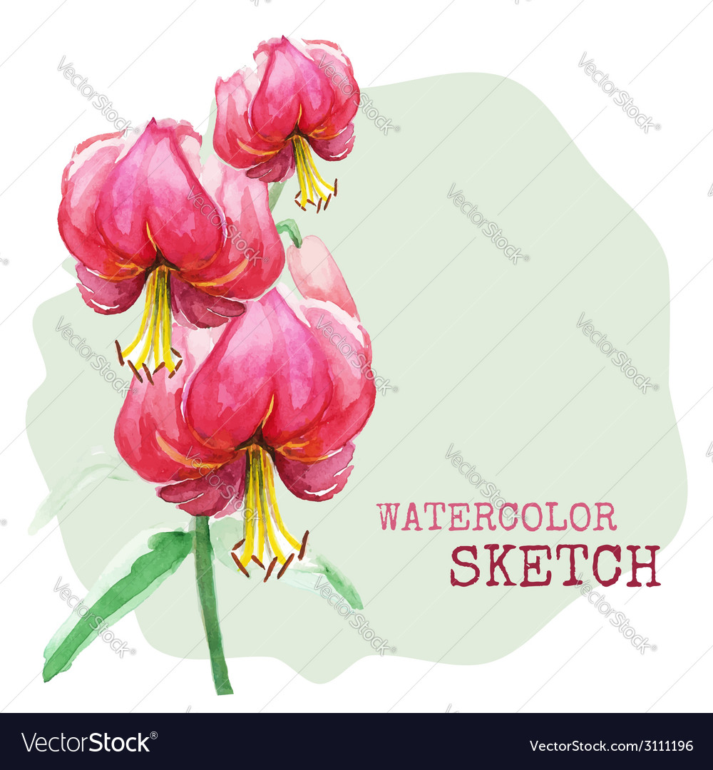 Watercolor painted flowers vector | Price: 1 Credit (USD $1)