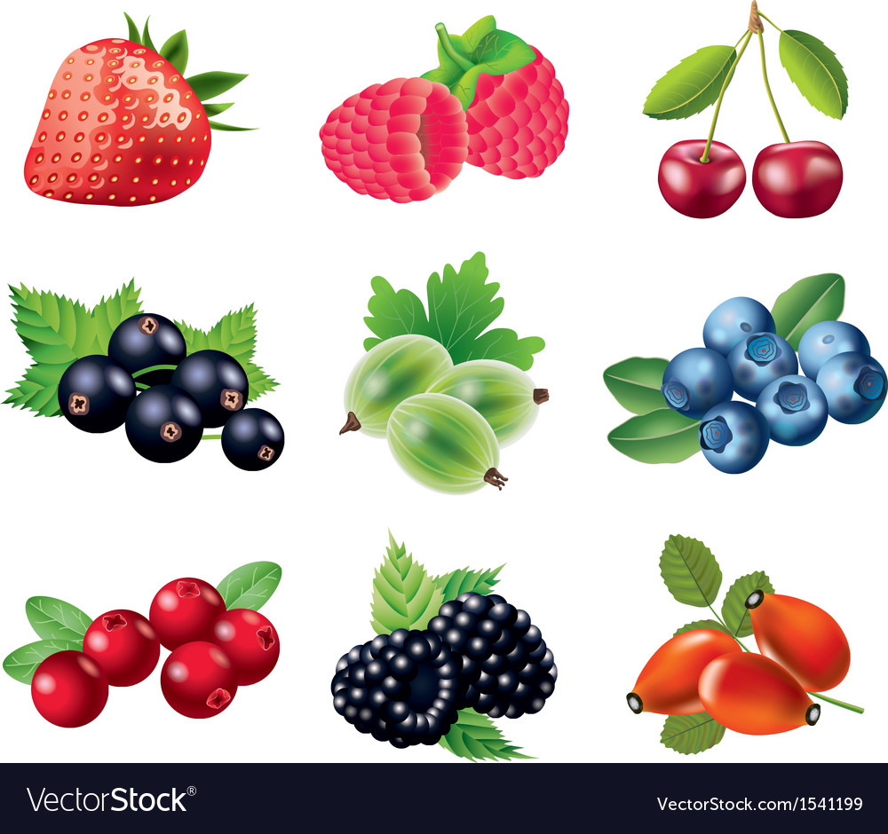 Berry set vector | Price: 3 Credit (USD $3)