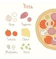 Regular pizza ingredients vector