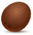 Realistic coconut vector