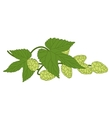 Hop plant with leafs vector