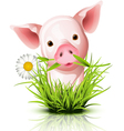 Little pig grass vector