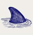 Reef shark vector