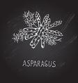 Hand drawn asparagus vector