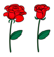 Two red roses vector