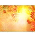 Autumn foliage background vector