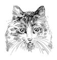 Cat sketch vector