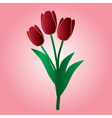 Red tulip flower eps10 vector