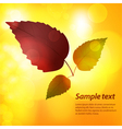 Autumn leaf background with sample text vector