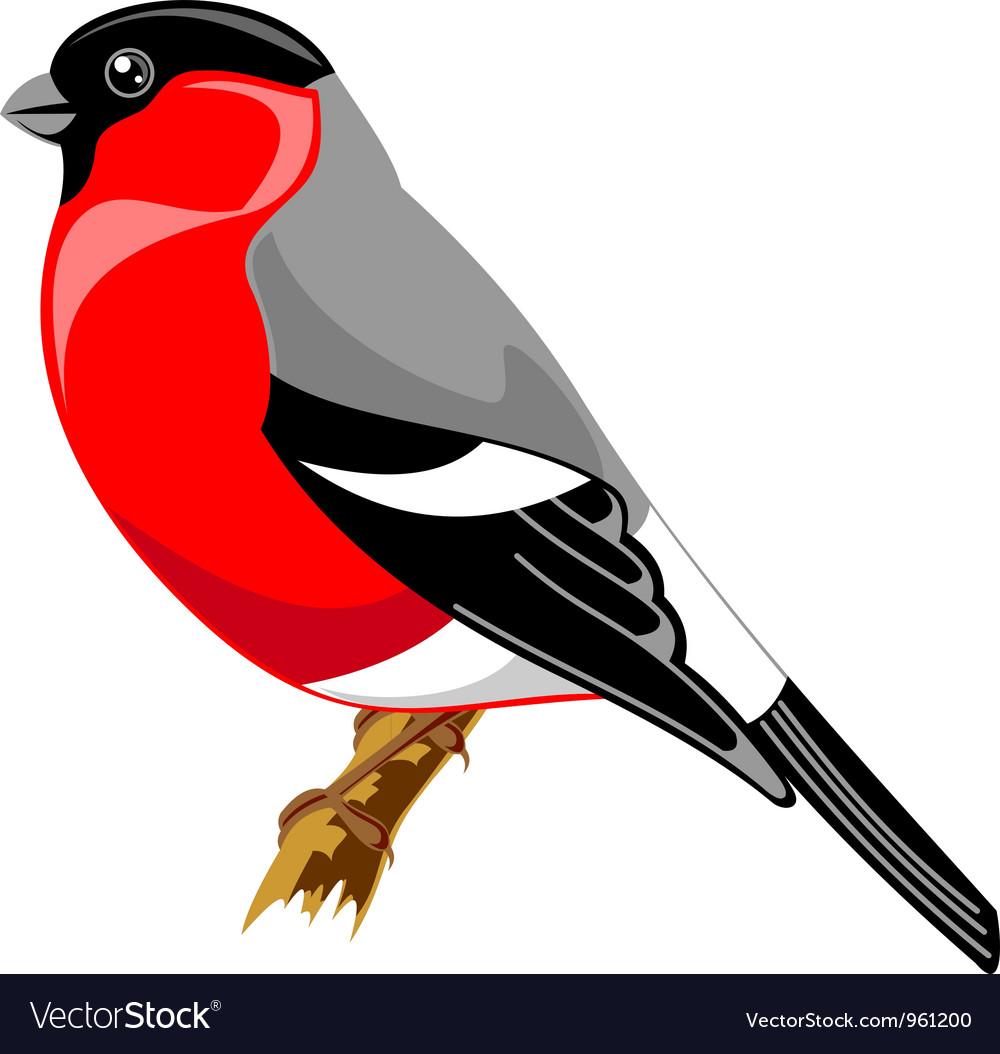 Bullfinch bird vector | Price: 1 Credit (USD $1)