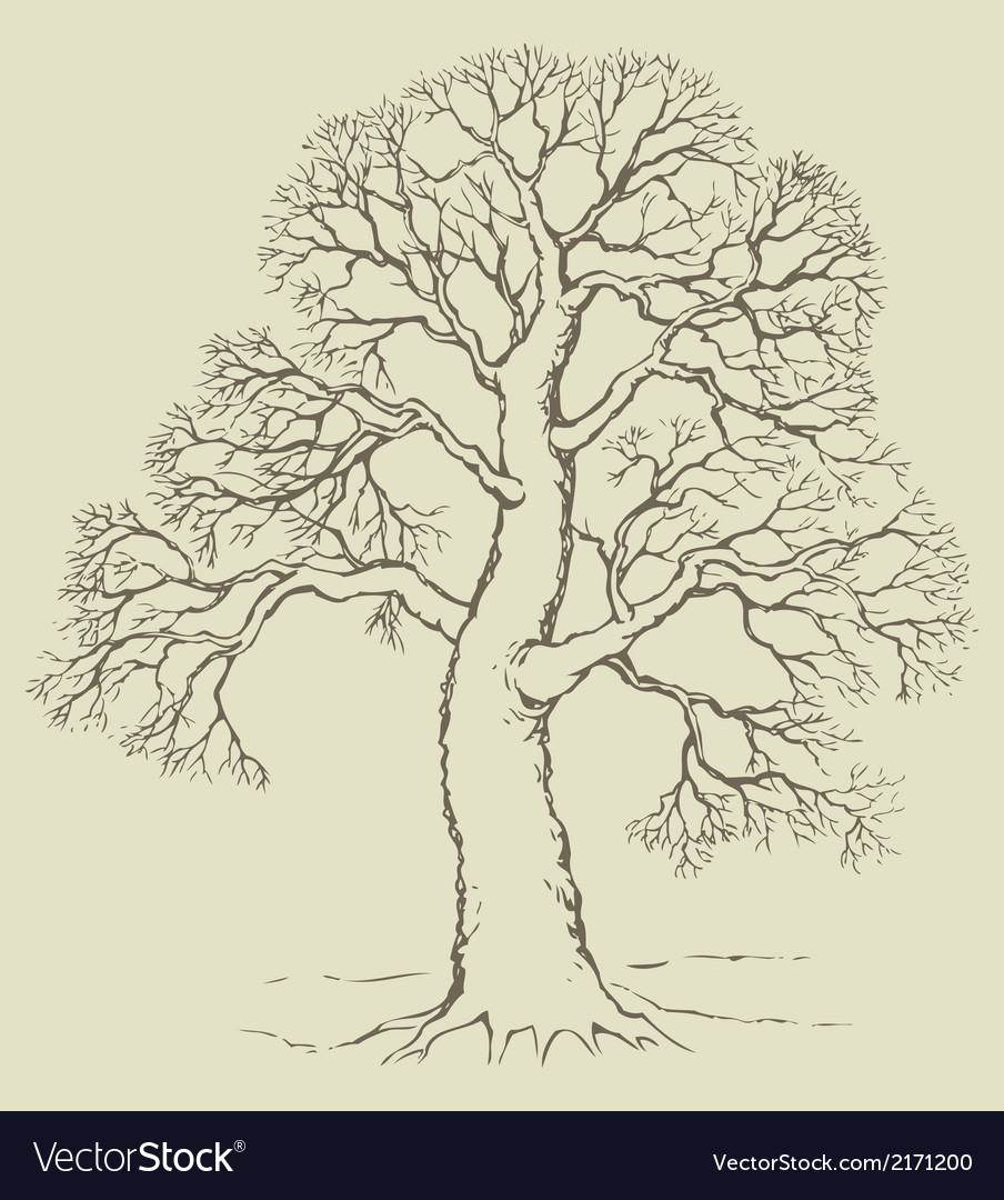 Tree with bare branches vector | Price: 1 Credit (USD $1)