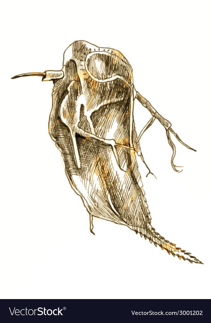 Daphnia vector | Price: 1 Credit (USD $1)