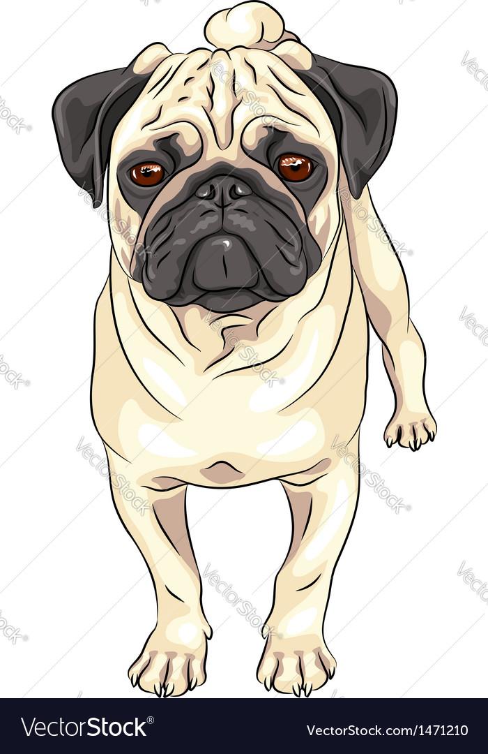 Pug vector | Price: 3 Credit (USD $3)