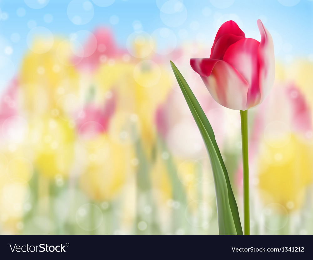 Pink tulip create with a selective focus eps 10 vector | Price: 1 Credit (USD $1)