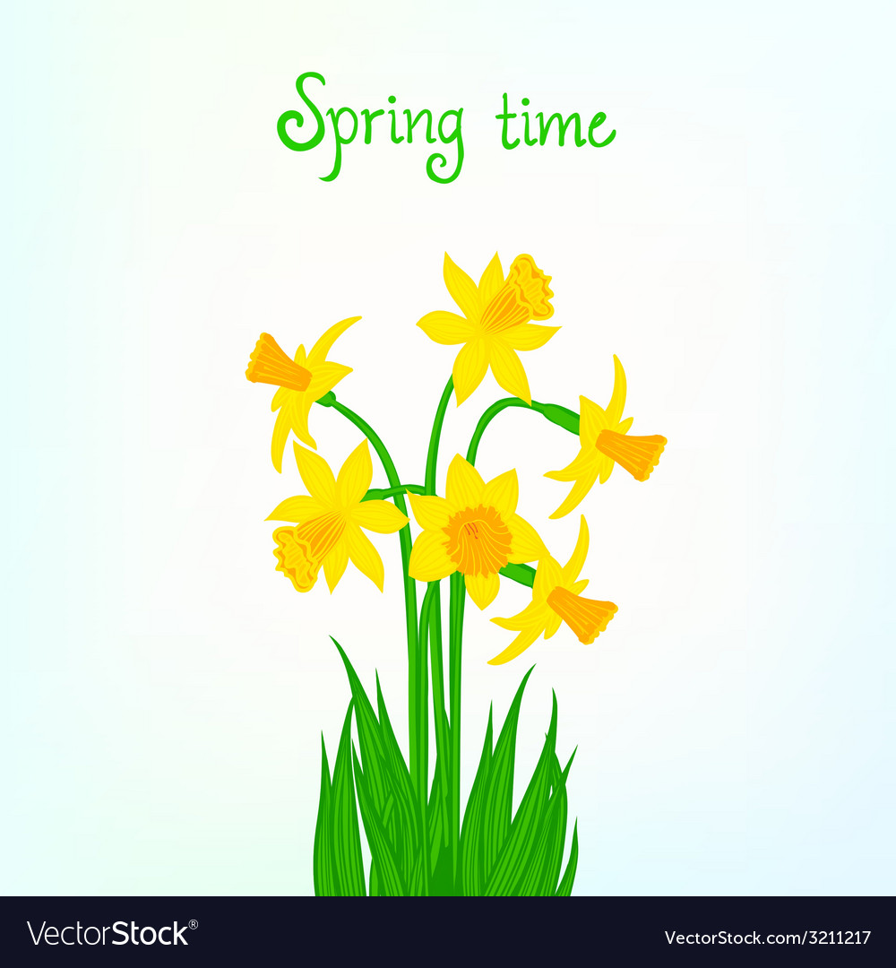 Spring card background with daffodil vector | Price: 1 Credit (USD $1)