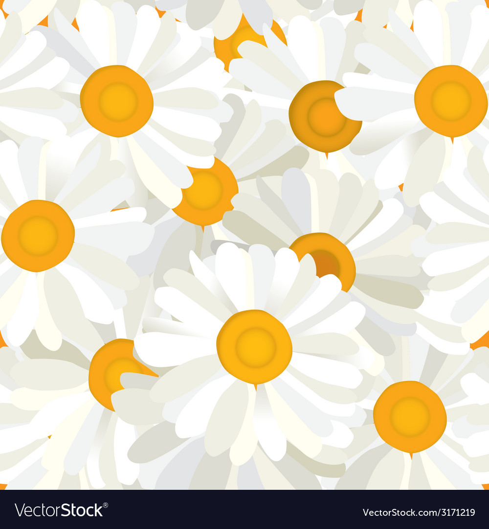 Seamless camomiles background vector | Price: 1 Credit (USD $1)