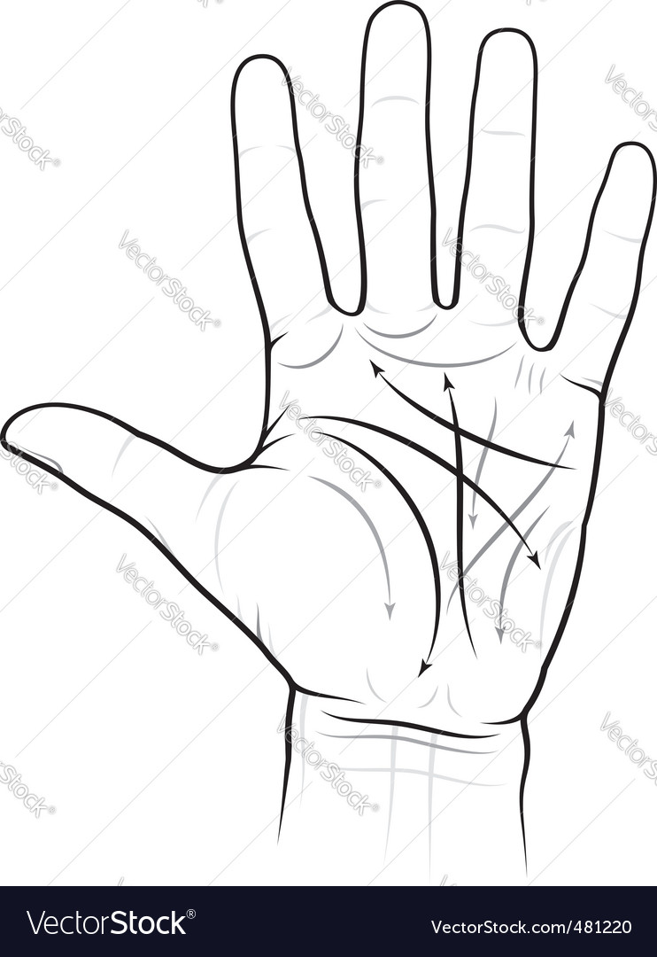 Chiromancy chart of a palm vector | Price: 1 Credit (USD $1)