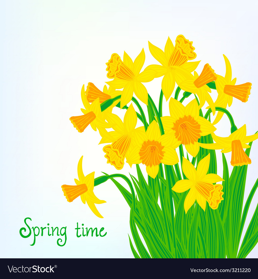 Spring card background with daffodils vector | Price: 1 Credit (USD $1)