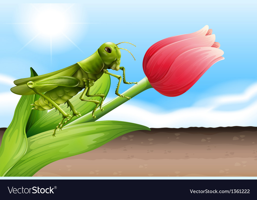 Flower bud grasshopper vector | Price: 1 Credit (USD $1)