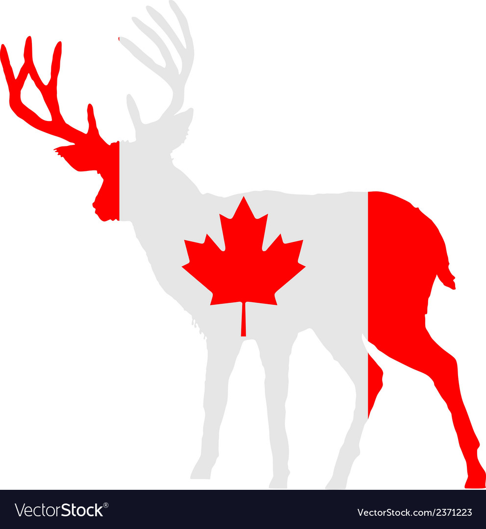 Canadian deer vector | Price: 1 Credit (USD $1)