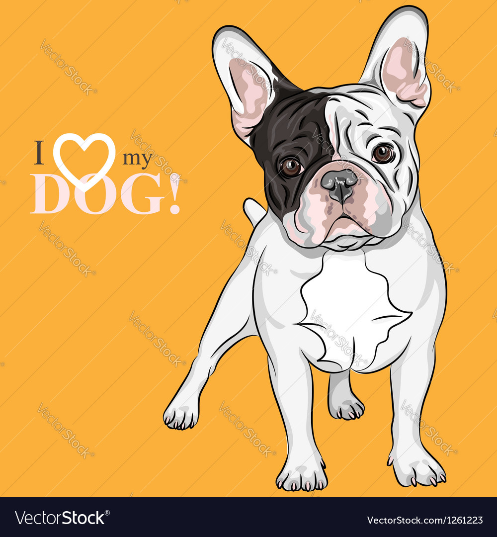 Domestic dog french bulldog breed vector | Price: 3 Credit (USD $3)