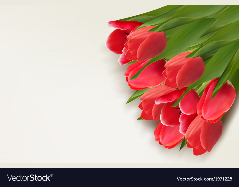 Flower background with red tulips and sample text vector | Price: 1 Credit (USD $1)