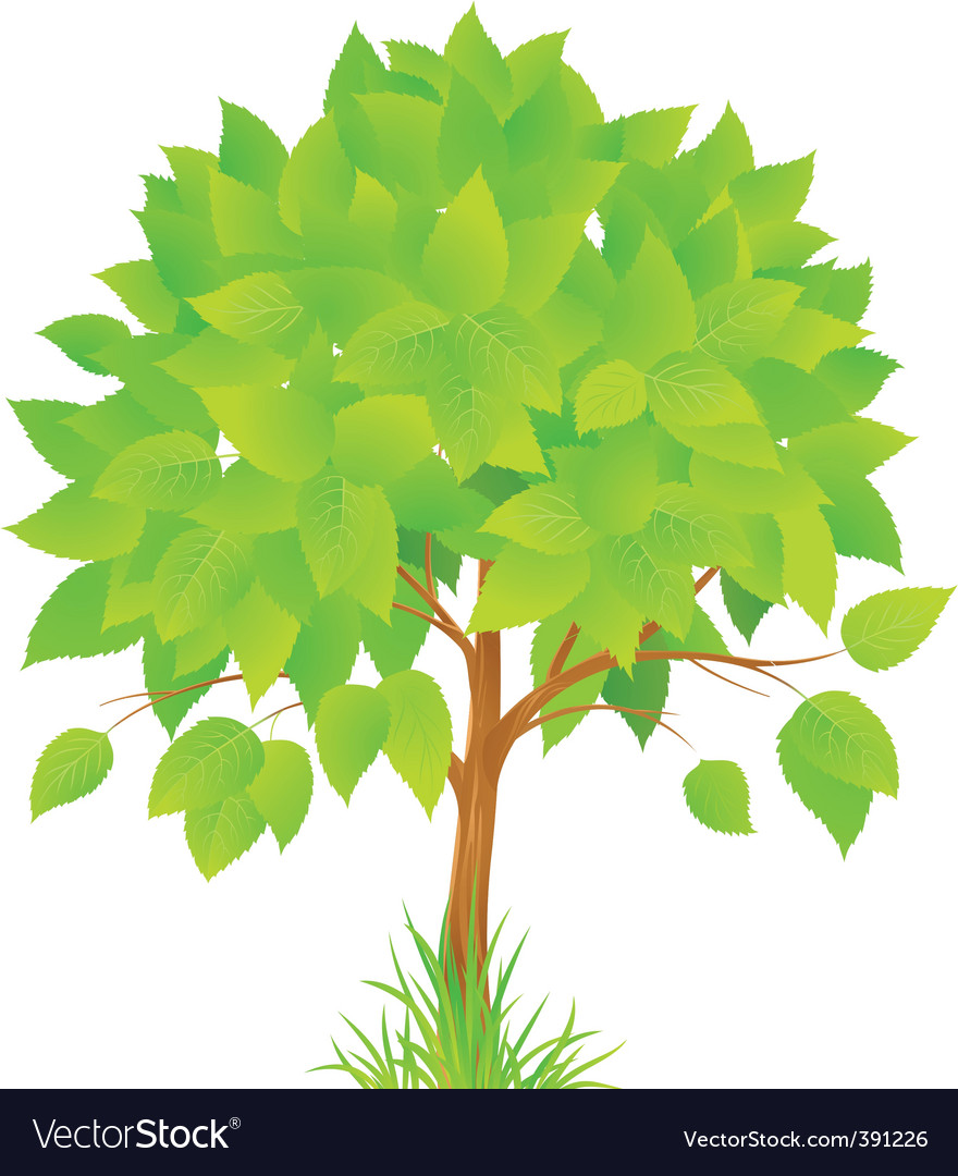 Green tree vector | Price: 1 Credit (USD $1)