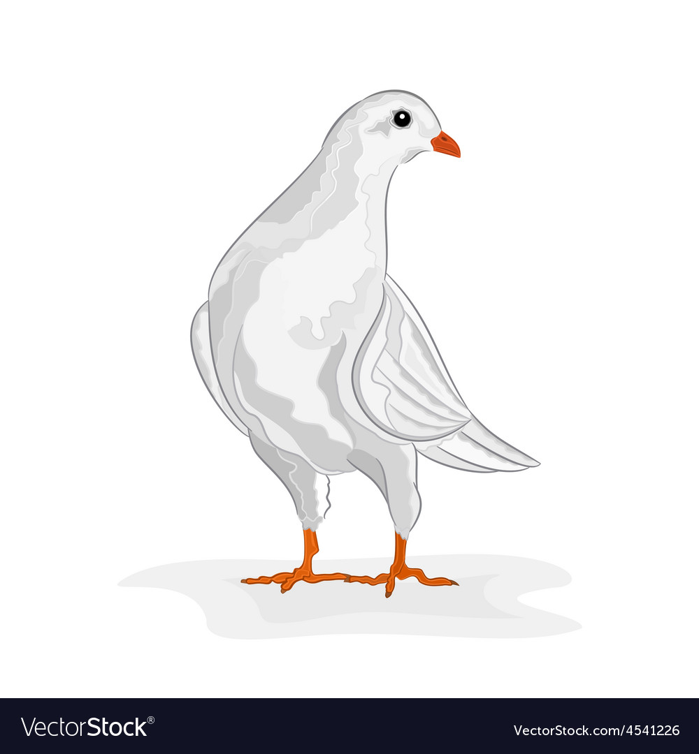 White dove white pigeon symbol peace vector | Price: 1 Credit (USD $1)