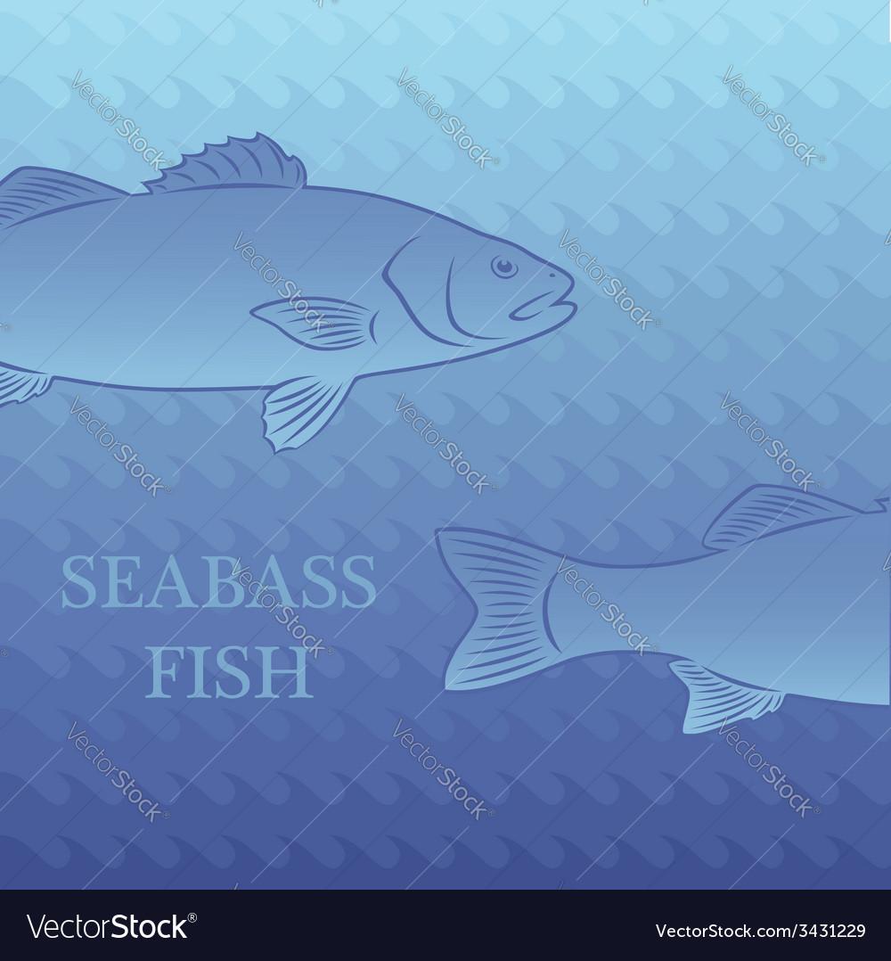 Fish labrax vector | Price: 1 Credit (USD $1)