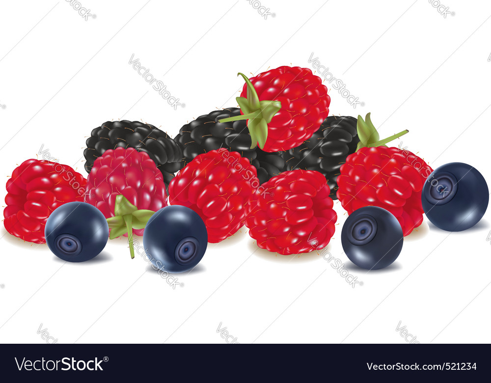 Group of colored berries vector | Price: 1 Credit (USD $1)
