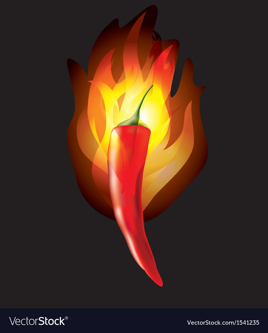 Chilipepper fire vector | Price: 1 Credit (USD $1)